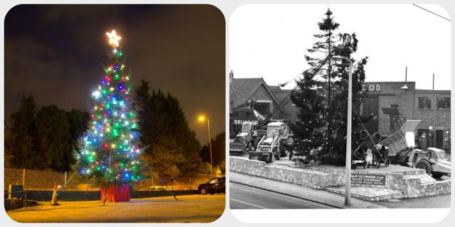 Selwood's magnificent Christmas trees: 1960s vs 2013. (Image credit: Selwood)