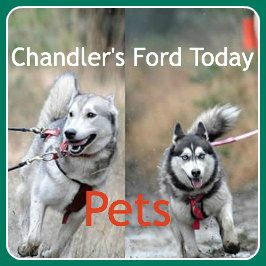 Chandler's Ford Pets (Neil's huskies)