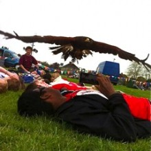 Harris Hawk Flying over Our Faces