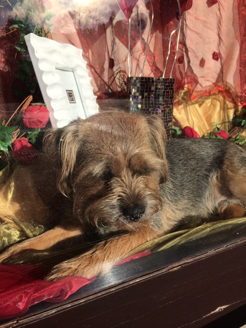 Teddy the shop dog can assist you with a quick cuddle.