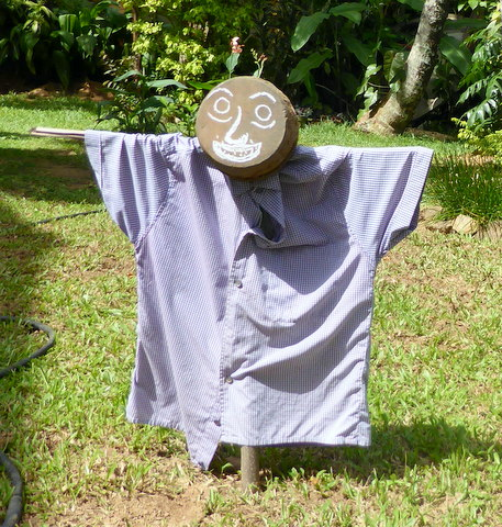 One use for an empty yoghurt pot. He is supposed to scare off the wild boar - some hope!