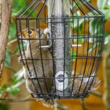 Squirrel In Hiltingbury