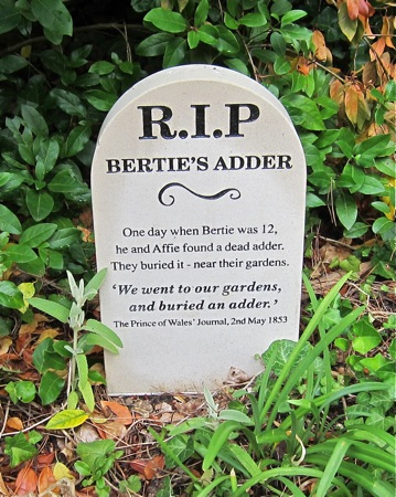 RIP: Bertie's Adder. Seen at Osborne House garden. (Bertie: Queen Victoria's eldest son.)