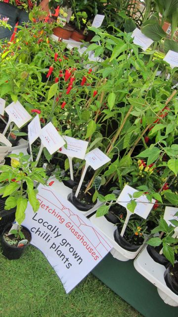 A variety of chilli plants by Fletching Glasshouses at Chilli Festival in Eastleigh.