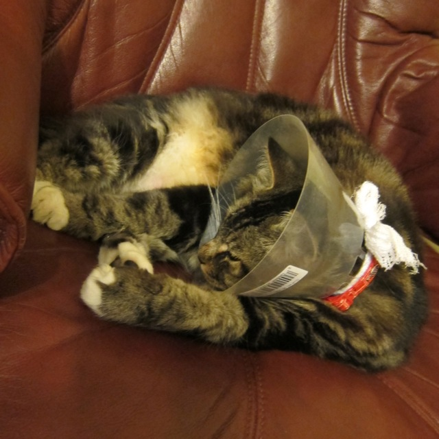 Our injured cat is recovering.