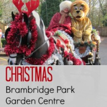 Christmas Surprise: Brambridge Park Garden Centre