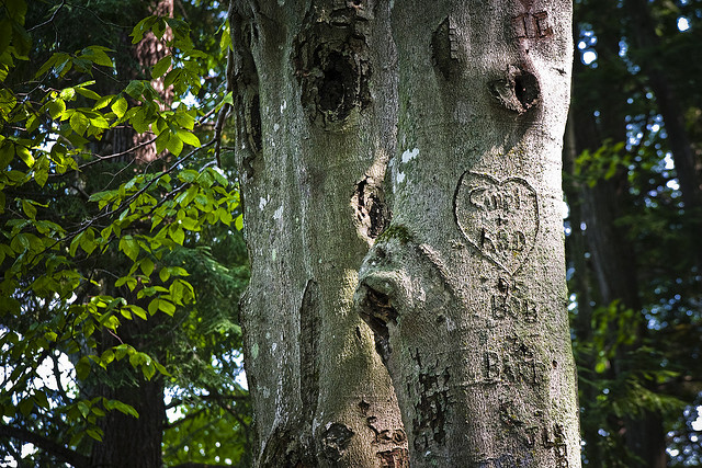 "Carvings on tree by <a href=""https://www.flickr.com/photos/richevenhouse/3836243337/in/photolist-ej85Ah-iJt62-68HH52-ej2gtt-dAL4q1-3yXZL-4ia4UV-nexnPu-mpP6oi-ej7YuJ-3g1qTM-7fRAAu-fQ7qM-5ggUzy-cA7a4f-anrhpB-atMSYh-c3CLzw-6QZKuv-bFhcJx-7Ynu8X-mpPLex-oNdDqi-mpP5JT-85GG8p-g8mU7X-pkfAv7-899dRL-nv7p5e-dobrN-nFDstd-6quE71-mpHe5H-aM31UH-9GQuCD-dDTgPk-27ua2-a86cQM-aA9evN-m4Da42-3JFAd3-4wA9Wu-bXbtTc-8tJweE-nLLFxB-bWLQoe-7aPriT-aiENSr-jHM7rn-6ZQxP3""> Fellowship of the Rich</a> via Flickr."