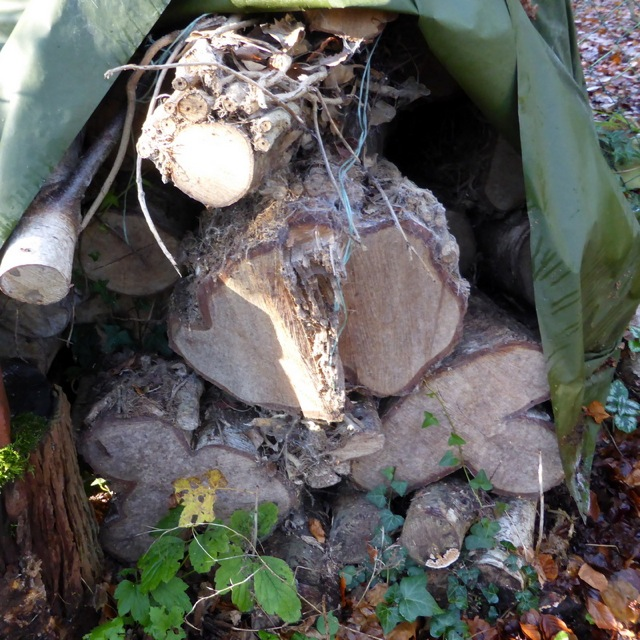 Covered logs slowly drying out in the garden.