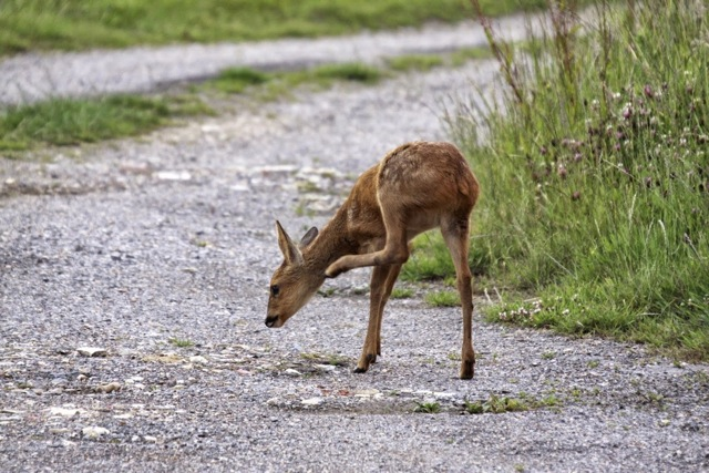 Fawn with an itch. Views From My Window by Mark Braggins - deer.