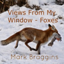 Views from My Window – Foxes