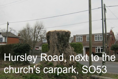 old tree Hursley Road, SO53 Chandler's Ford