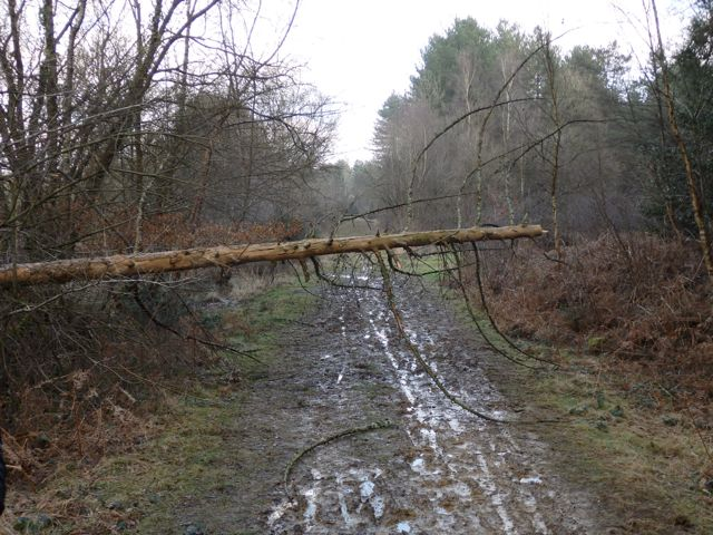 Hut Wood