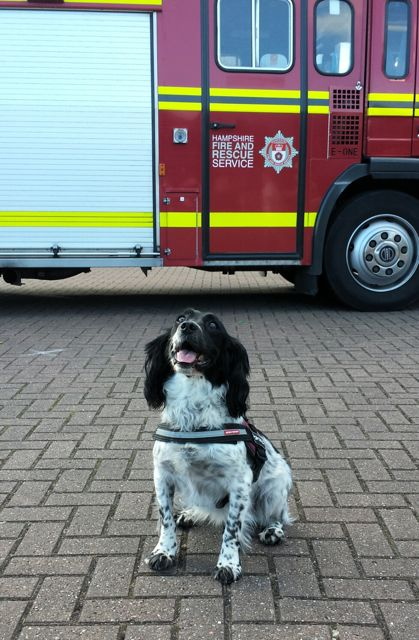 Fire dog Millie