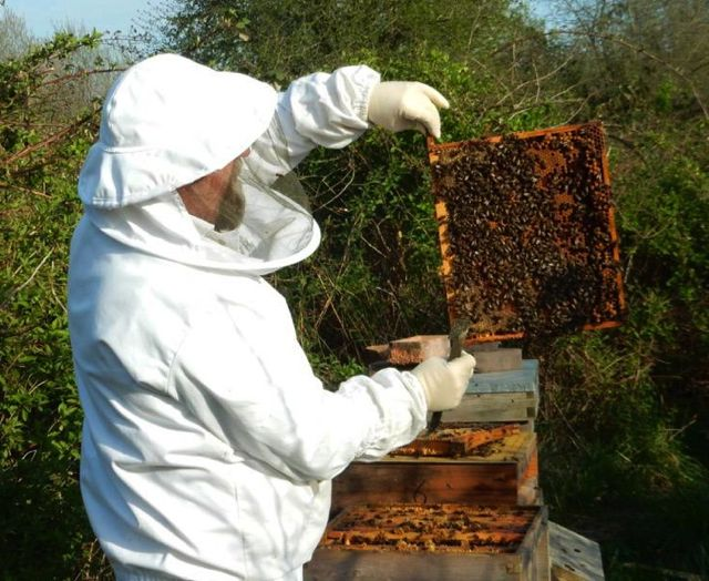 John Davison the beekeeper