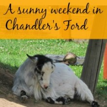 Sunny Weekend in Chandler's Ford