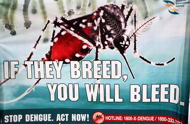 "Dengue Fever Warning. Image by <a href=""https://www.flickr.com/photos/rooymans/3493630510/in/photolist-6jHLCN-eP8wm3-brQLaK-2zGbH3-6vpc1E-5hxVo-2TvyYX-9YC5M9-e4oYFo-7mBhsf-5XeGZA-nCYwTo"">Joost Rooijmans</a> via Flickr."