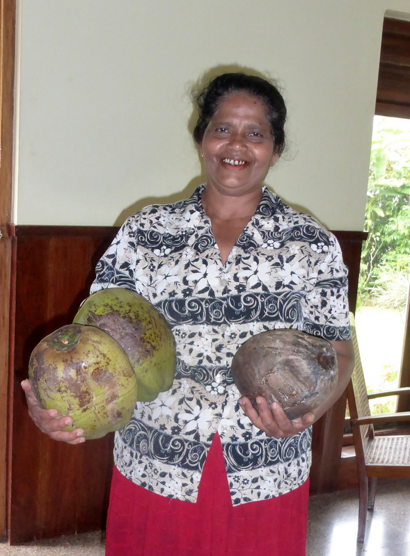 Ira takes home a bunch of coconuts