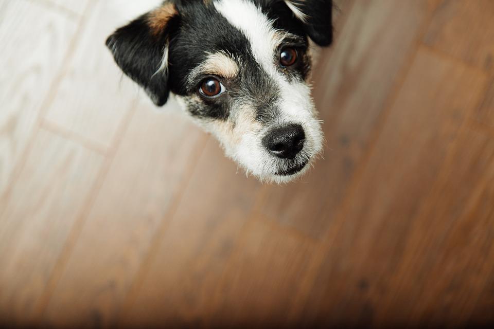 Animals are disturbed by fireworks. Dog image via Pixabay.