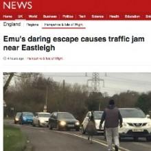 Emu Escaped