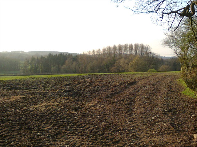 View from the Hook Woods Walk (image by Allison Symes)