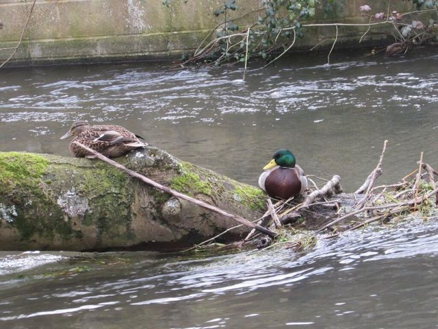 Resting / nesting place for waterfowl