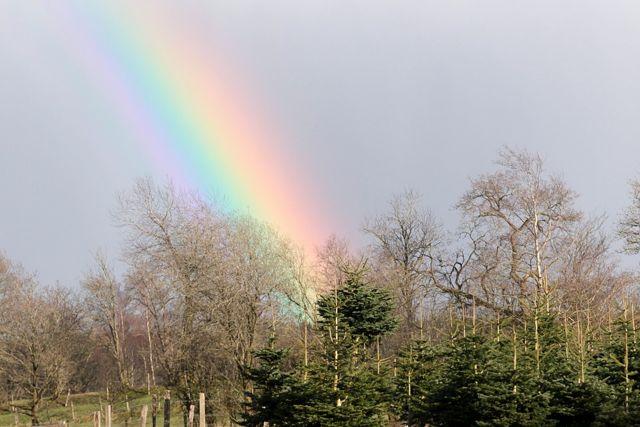 rainbow - image by Myriams fotos via Pixabay