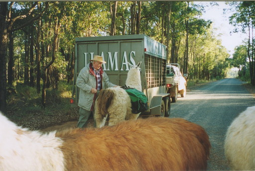 Doug Clews making final adjustments to his llama's panniers (Photo by Wendy F)