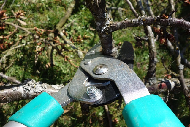 pruning shears pixabay blickpixel image