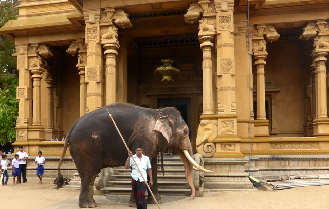 Elephant at Kelani Vihare