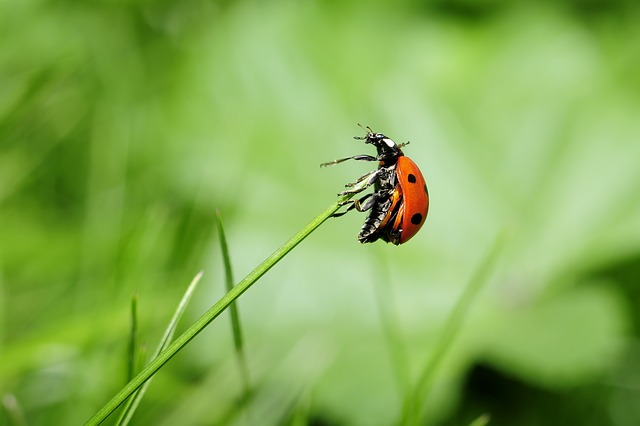 Ladybug image by BubbleJuice via Pixabay