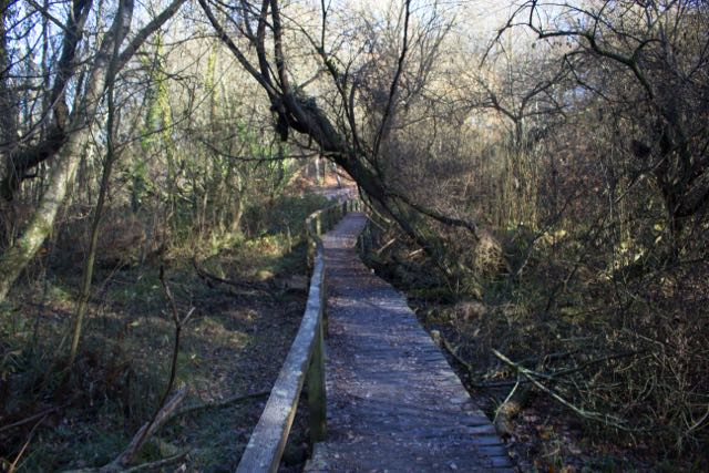 Hocombe Mead Chandler's Ford Nature Reserve: Board Walks image