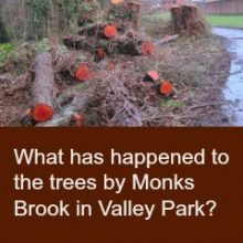 What has happened to the trees by Monks Brook in Valley Park?