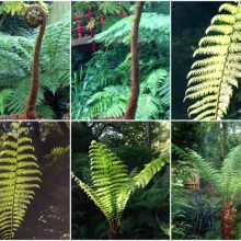 Ferns, what are they good for?