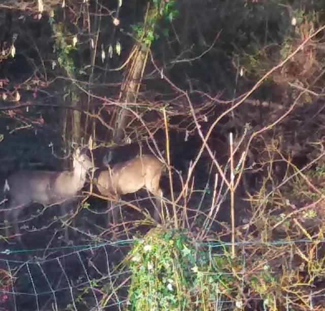 wildlife image