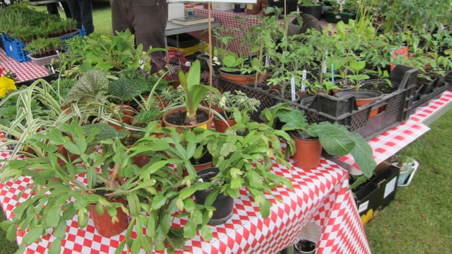 Plant sales by Chandler's Ford Methodist Church.