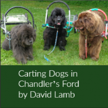 Carting Dogs in Chandler's Ford – David Lamb