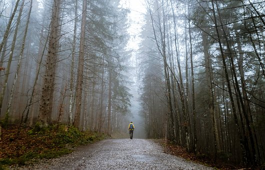 General forest walk shot but similar to Jermyns Lane, image via Pixabay