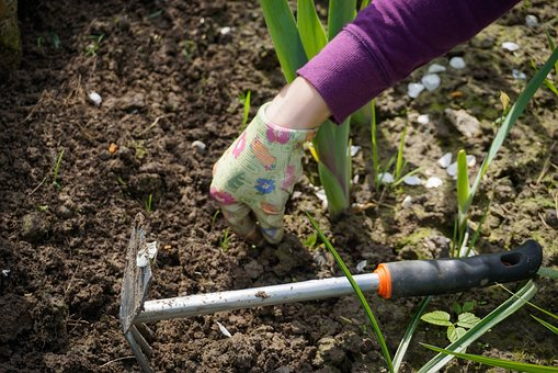 Weeding - image via Pixabay