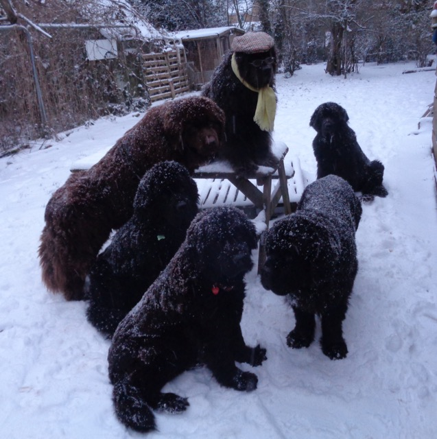 All dogs enjoying the snow in winter