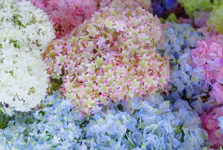 Fake flowers can be beautiful and are a blessing to allergy sufferers. Image via Pixabay