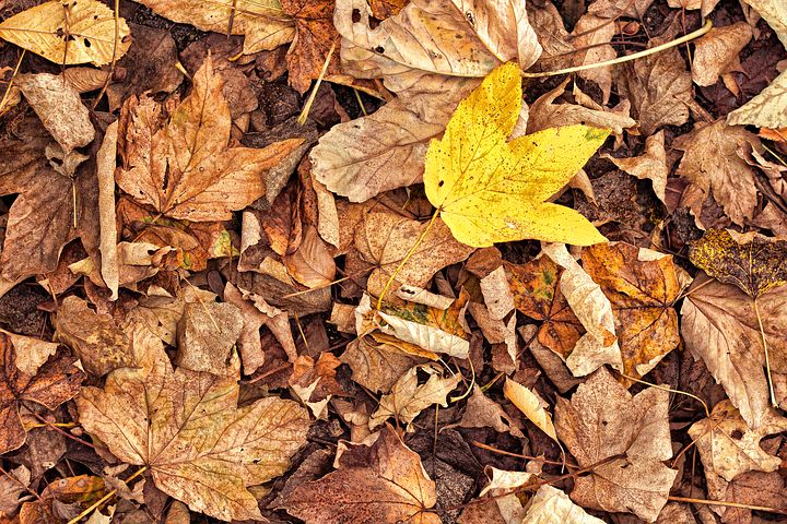 Part 6 - Beautiful autumn leaves but please don't block the road with them. Image via Pixabay