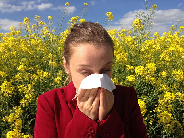 Part 7 - Hayfever misery shouldn't be understated - image via Pixabay