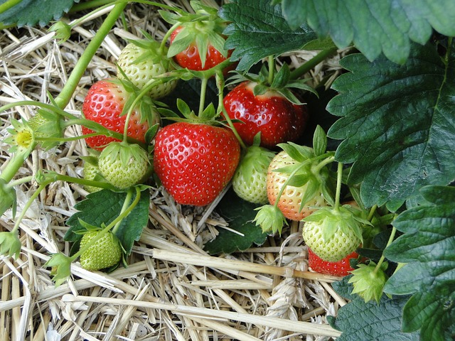 strawberries via Pixabay