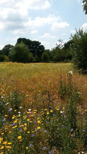 Another view across the meadow-1