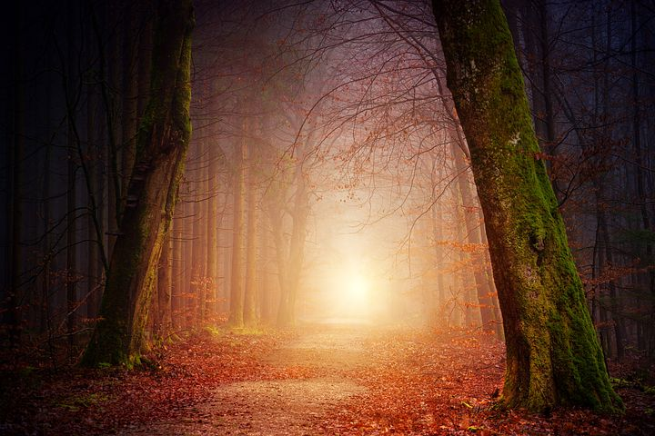 A good photo shows light off to its best advantage as in this forest scene - Pixabay image