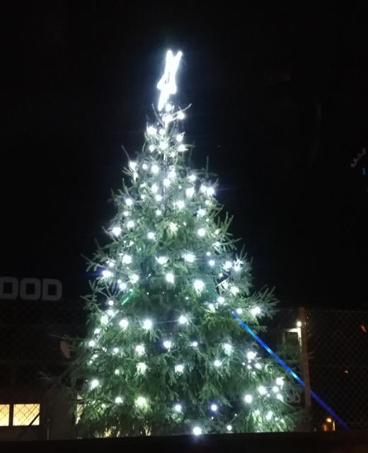 Selwood's Christmas tree, 2018