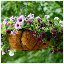 Hanging basket by Chiot's run