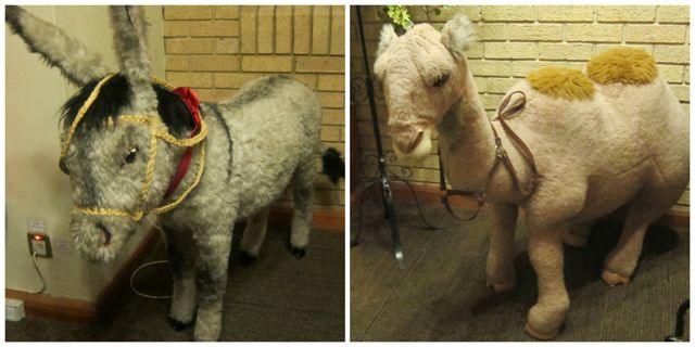 Church goers at Christmas were greeted with a camel and a donkey at St. Boniface Church.
