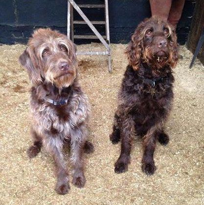 Missing from Chandler's Ford: Robbie (right) and Barney (left).