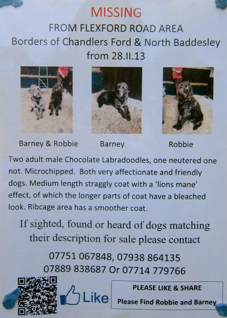 Poster Missing Dogs